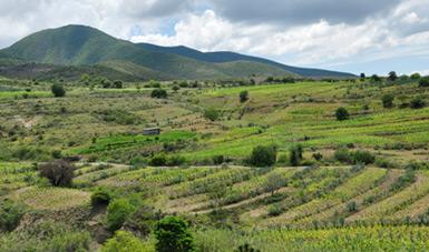 Cultivos nativos de México