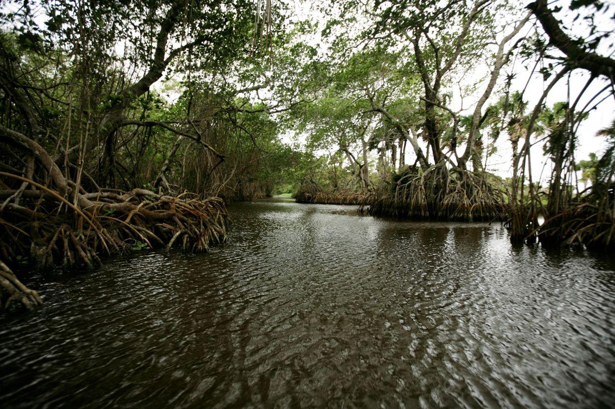 Dirección de Vulnerabilidad y Adaptación de los Ecosistemas