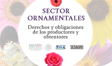 Sector Ornamentales