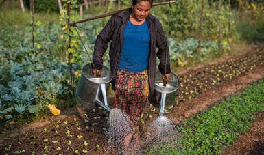 Las proyecciones indican que la humanidad podría enfrentar un déficit del 40% en la disponibilidad del agua hacia 2030.