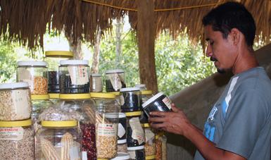 Cultivos nativos de México para la alimentación y la agricultura
