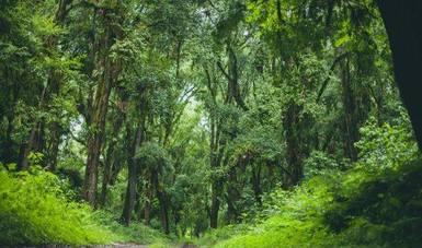 Aprovechamiento de bosques y agua