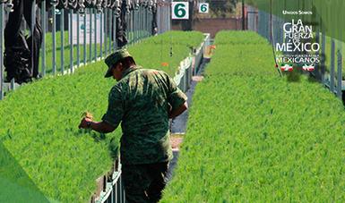 Construcci n y operaci n de viveros forestales militares for Viveros forestales conafor