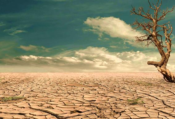 Imagen de un desierto con el suelo cuarteado. De lado derecho hay un árbol seco.