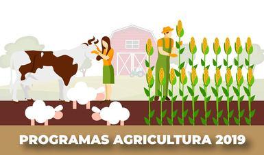Ganadera cuidando una vaca y tres ovejas y a lado un agricultor revisando maíz