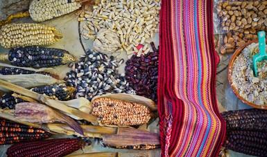 MÉXICO: Experiencias ecológicas para salvar al planeta