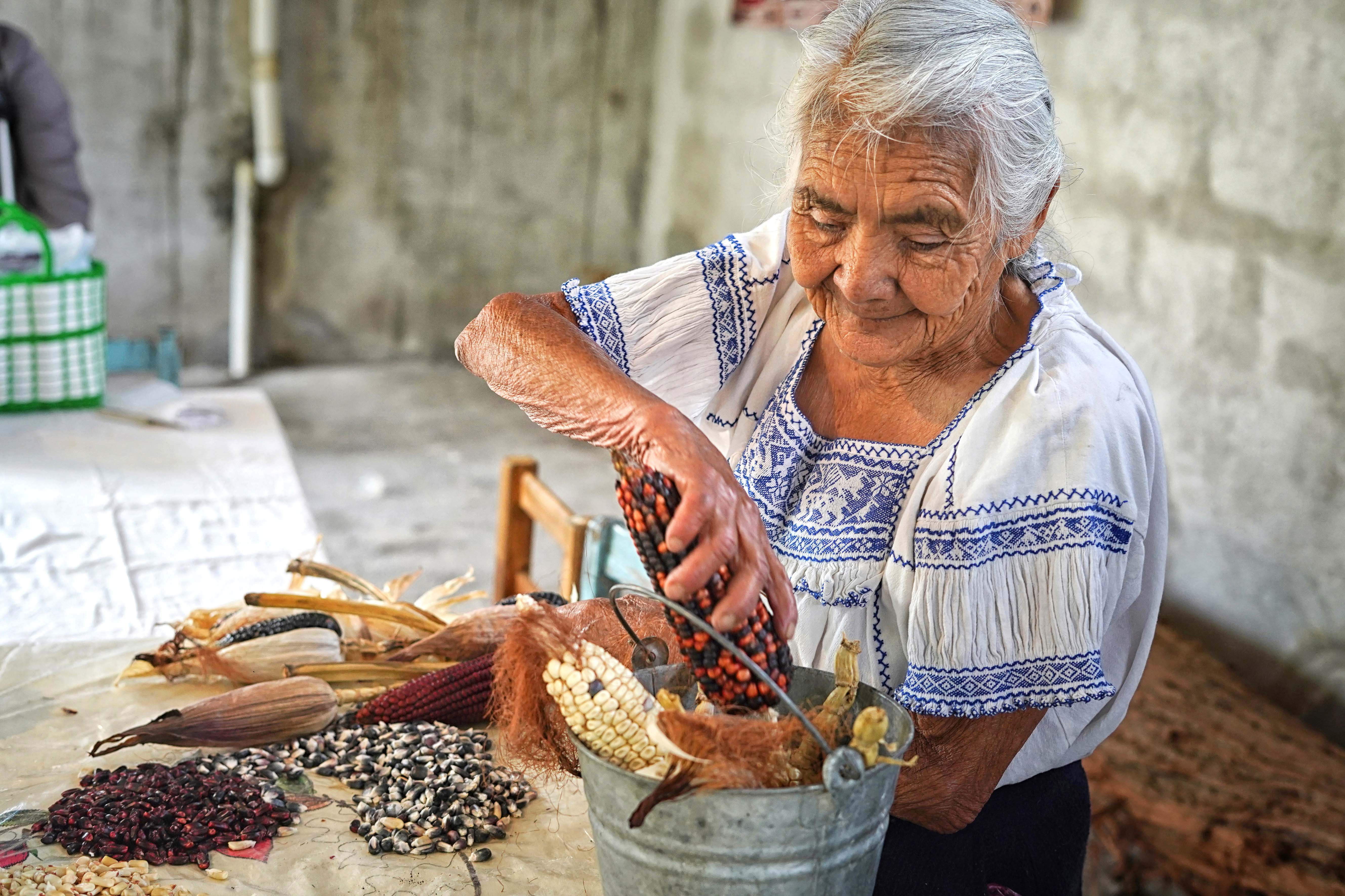 En las Ferias del Maíz se da el intercambio masivo de semillas entre productores.