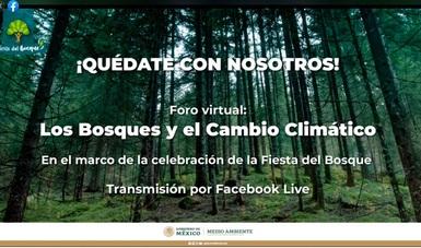 Toledo Manzur destacó cuatro programas del Gobierno de México en apoyo a los bosques.