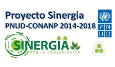 Proyecto Sinergia PNUD