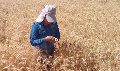 Calificación de semillas