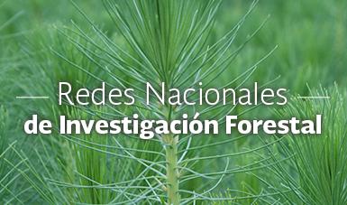 Redes nacionales de investigación forestal