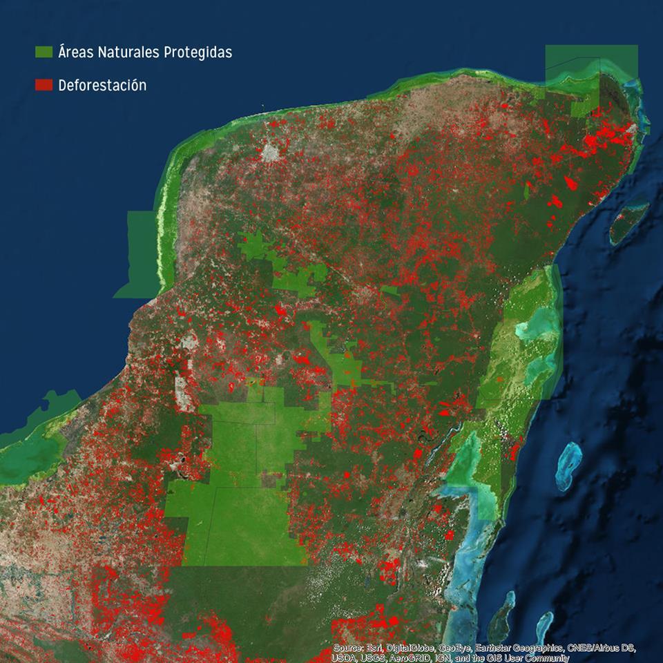 La deforestación de la península de Yucatán