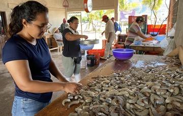 Conapesca registra una producción de 7, 943.1 toneladas de camarón de altamar hasta el 20 de octubre en la temporada de captura 2020-21