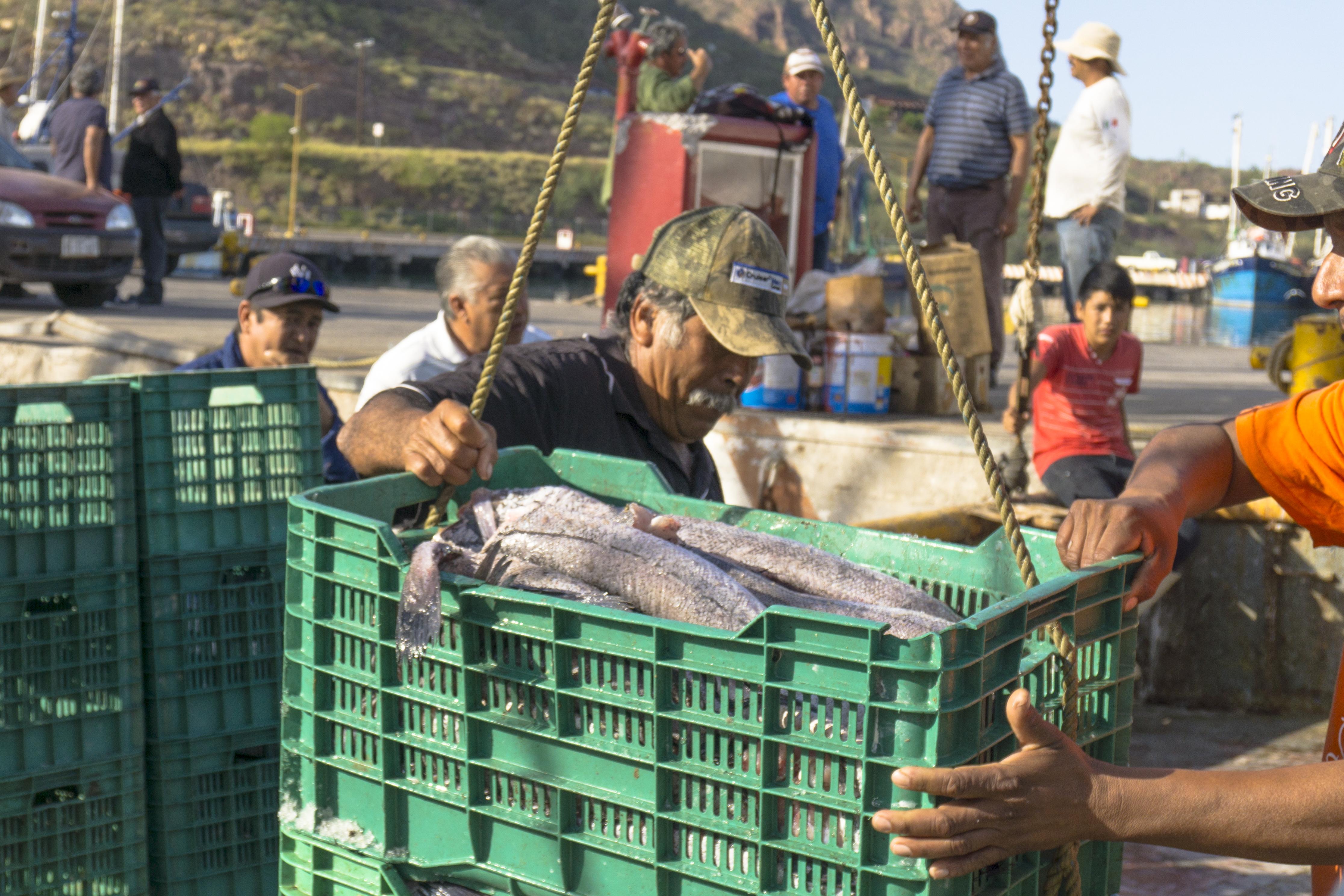 Pescadores mexicanos