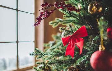 Recicla tu árbol de navidad