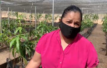 Ana Donaji, sembradora de Petatlán, Guerrero