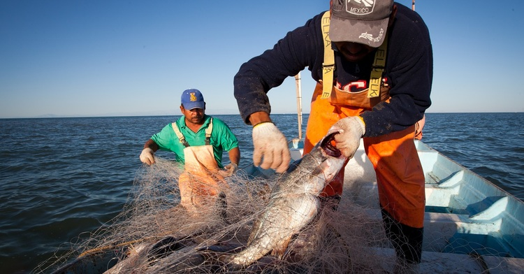 Estima el Programa Nacional de Pesca y Acuacultura 2020-2024 lograr crecimiento de la producción pesquera y acuícola del país en 15.52%