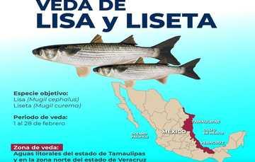 La veda temporal de lisa y liseta, garantiza la continuidad de la actividad pesquera en el país: Conapesca