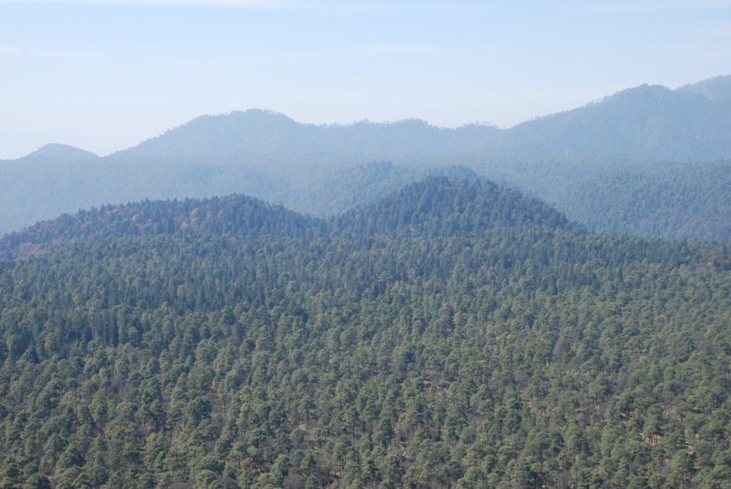 En México existen más de 60 tipos de vegetación forestal.