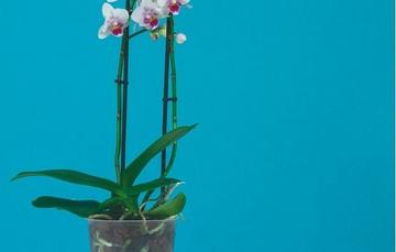 Regalar flores en días especiales es la perfecta opción para dar un detalle romántico