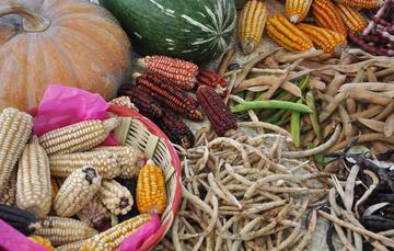 Redes de Recursos Genéticos para la Alimentación y la Agricultura