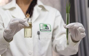 Puesto para investigador asociado postdoctoral en sistemas de bioenergía sostenible
