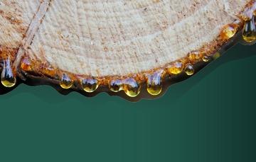 Resinas gomas y aceites mexicanos
