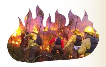 Día Internacional del Combatiente Forestal