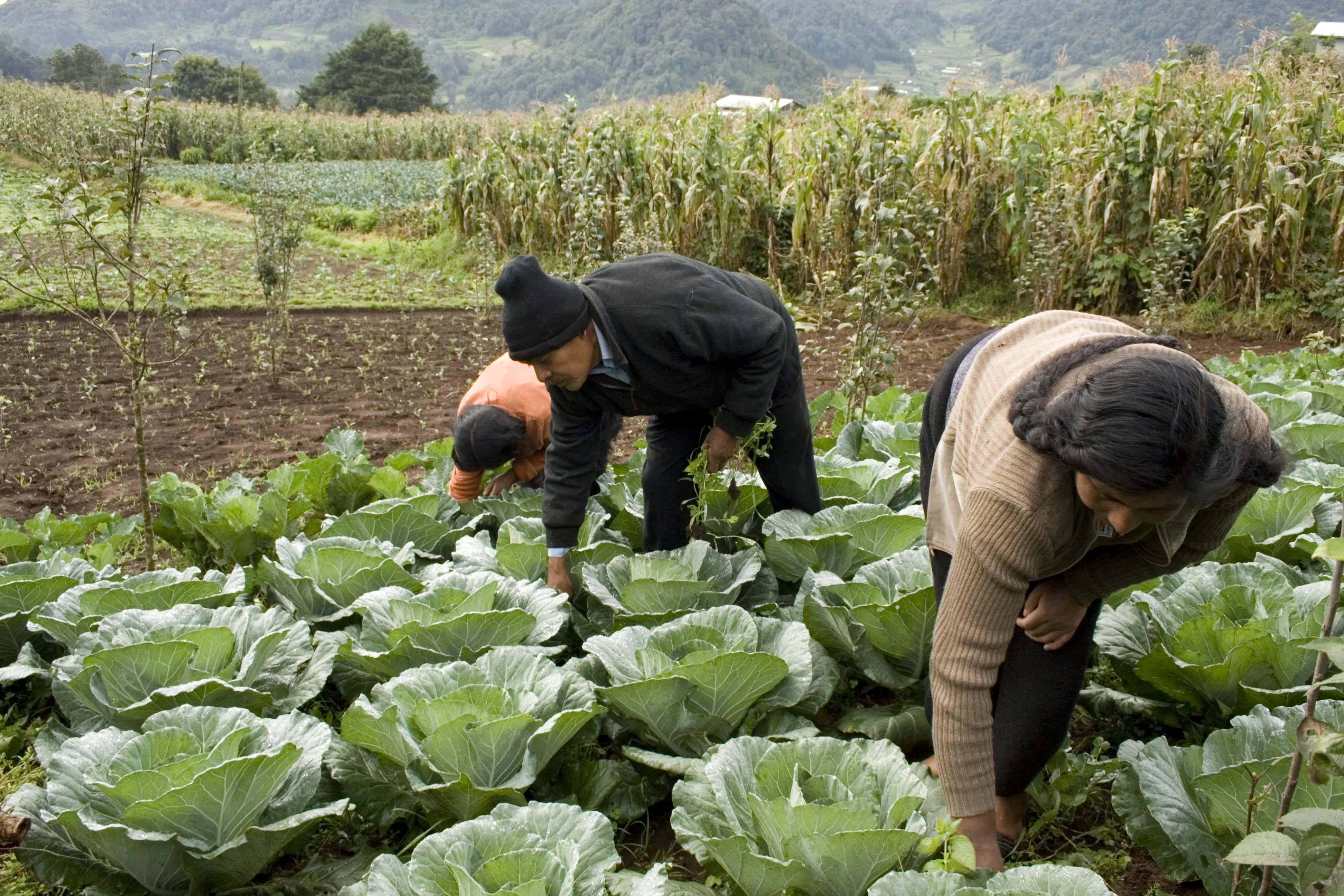 Ya conoces el programa de productividad rural y sus componentes secretar a de agricultura - Como vallar un campo ...