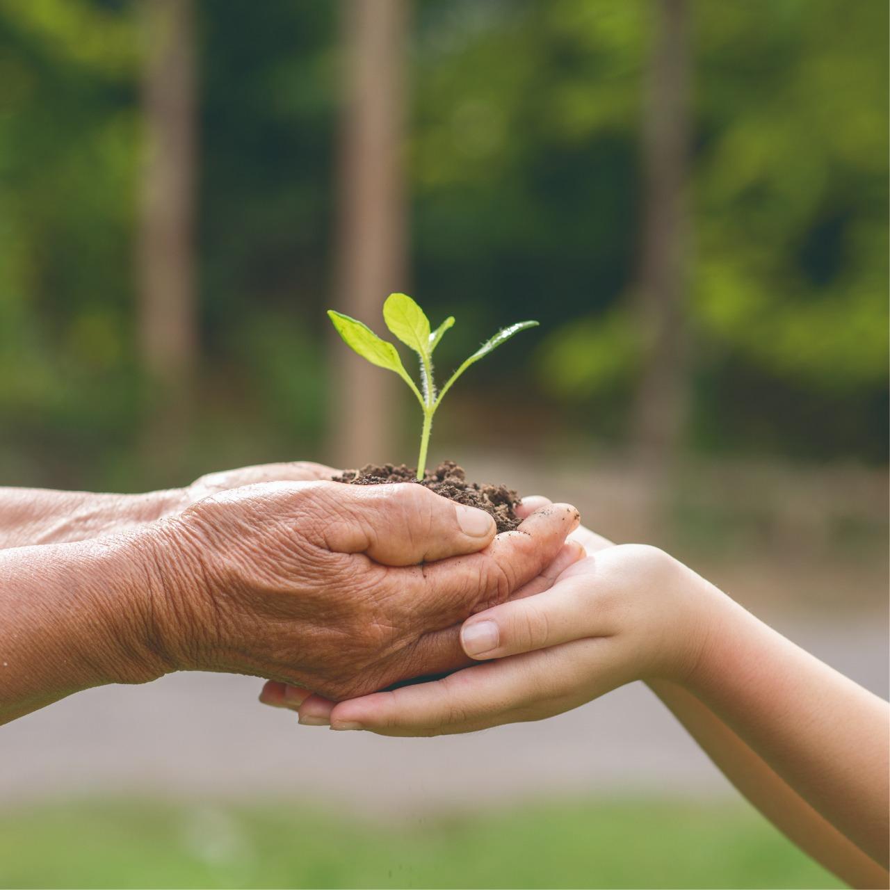 Una fecha para inculcar el cuidado del ambiente como prioridad social