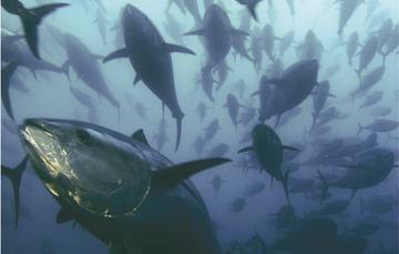 El 8 de junio se celebra el día mundial de los océanos, descubre su importancia aquí.