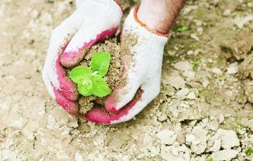 Desertificación y sequía dos problemas que afectan la seguridad alimentaria