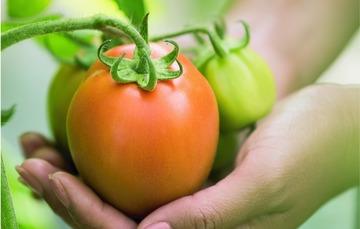 Celebrando el cuidado de tradiciones culinarias a través de prácticas agrícolas responsables