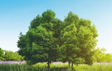 ¡Sembrar un árbol es sembrar vida!