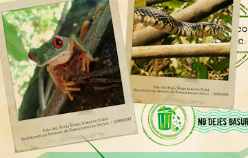 El Parque Nacional Cañón del Río Blanco, Veracruz fue decretado un 22 de  marzo de 1938 | Secretaría de Medio Ambiente y Recursos Naturales |  Gobierno | gob.mx