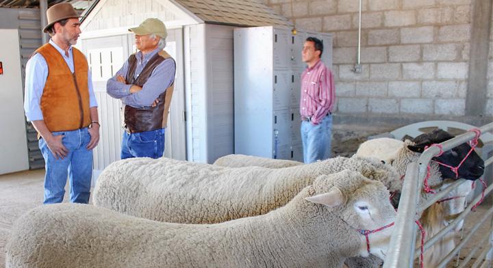 Recorrido del coordinador general de Ganadería, Francisco Gurría en un recorrido con ovinos.