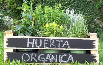 Cómo Hacer Tu Huerta Orgánica O Ecológica Servicio De Información Agroalimentaria Y Pesquera Gobierno Gob Mx