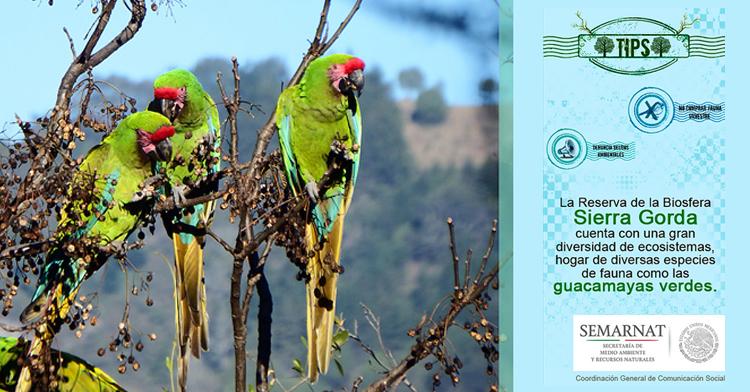 La Reserva de la Biosfera Sierra Gorda se ubica en el estado de Querétaro.