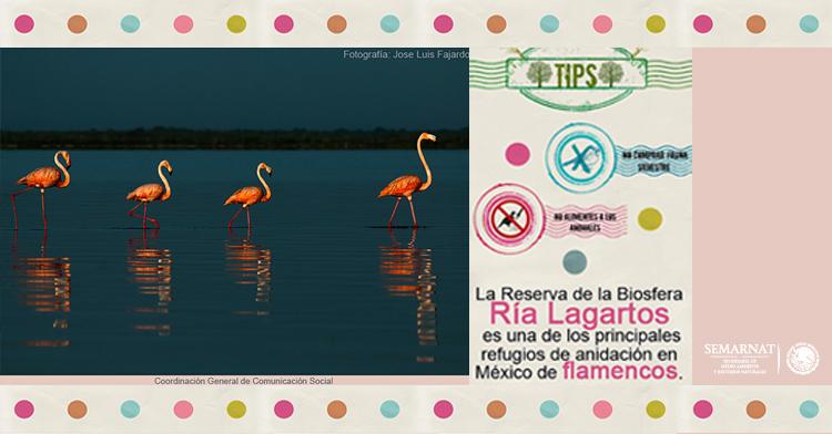 Ría Lagartos celebra 17 años de su creación como Reserva de la Biosfera