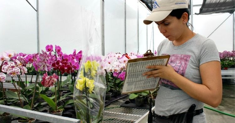 floricultora haciendo reporte de sus flores.