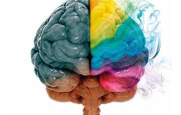 Cerebro de colores.