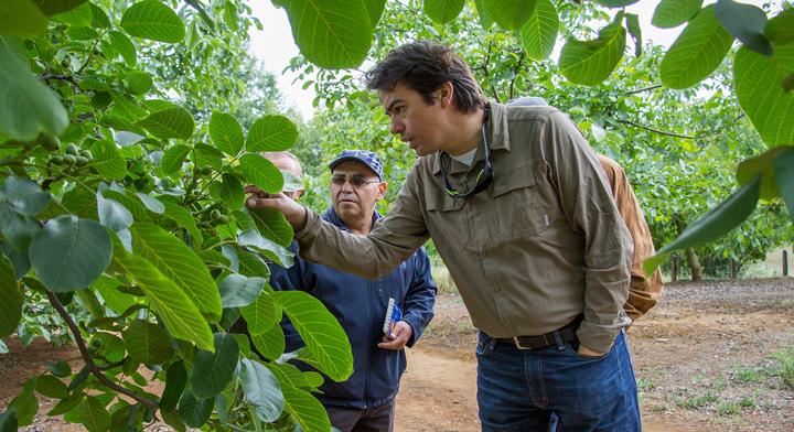 Extensionista revisando cultivos agrícolas