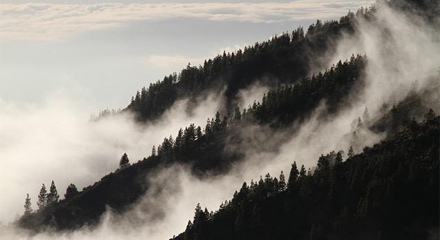 Se lanza el Centro de Excelencia Virtual en Monitoreo Forestal (CEVMF) en Mesoamérica.