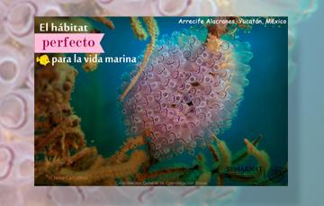 Este 06 de junio celebramos el decreto como Parque Nacional Arrecife Alacranes en Yucatán.