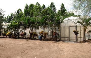 Las estructuras más utilizadas de la agricultura protegida son los invernaderos
