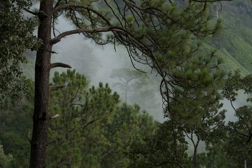 México trabaja en la conservación de sus zonas forestales.