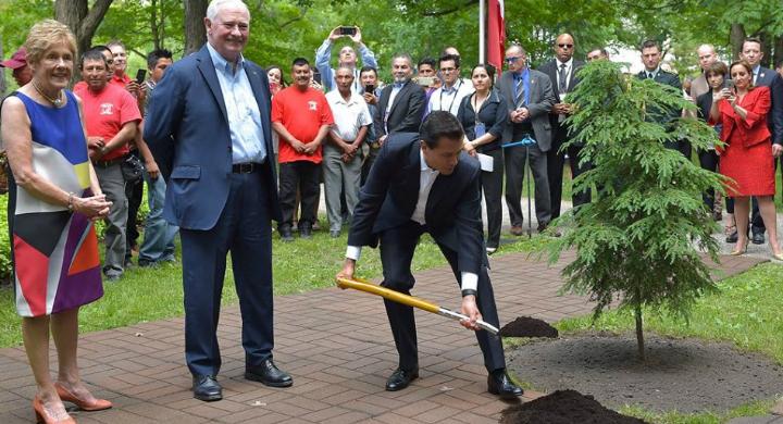 El Presidente Enrique Peña Nieto planta un árbol durante su Visita de Estado a Canadá.