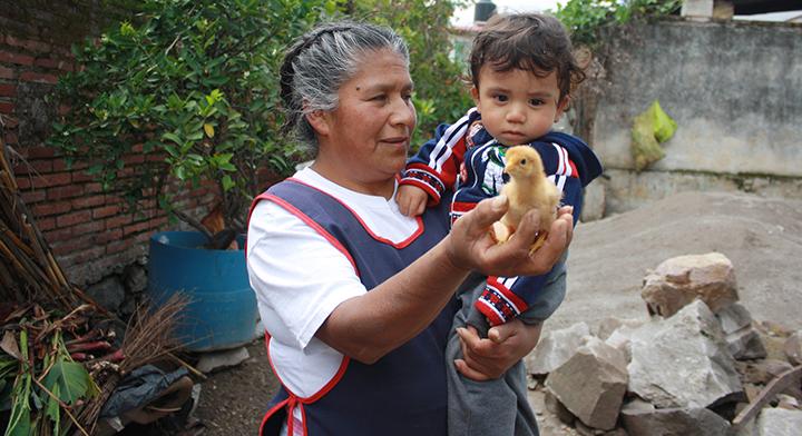 Señora de la tercera edad y niño con pollito de granja urbana