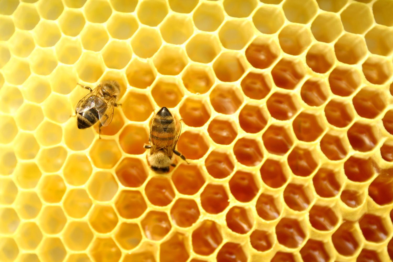 24ab11a710a La apicultura es conocida por la producción de miel