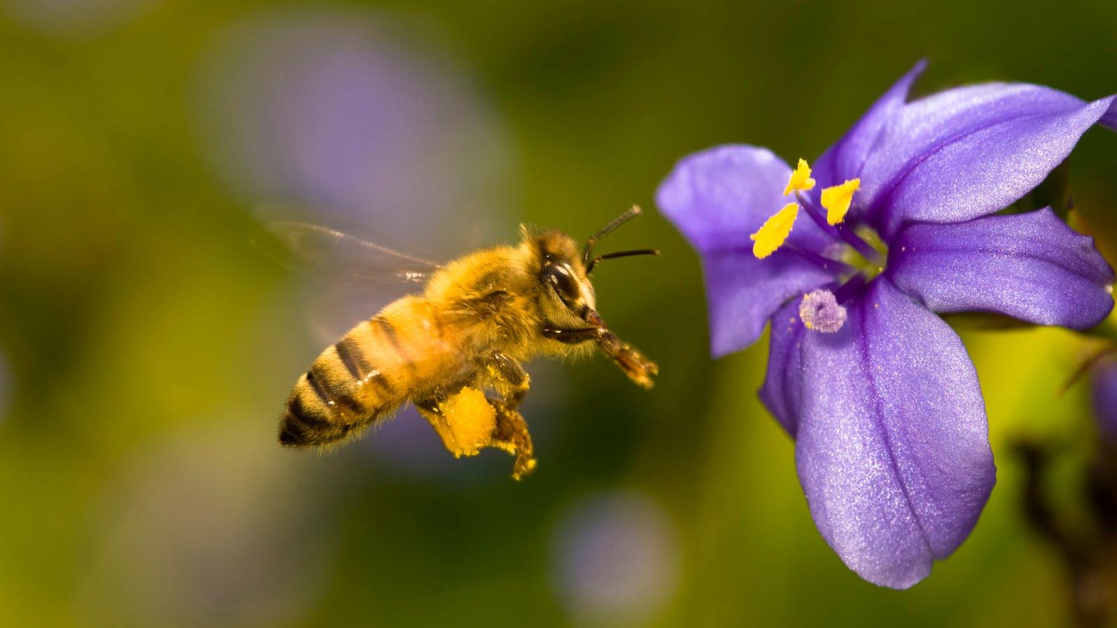 casas para abejas
